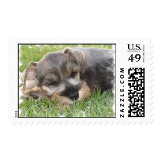 Schnauzer Postage Stamp