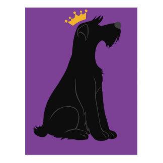 Schnauzer Prince Postcard