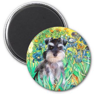 Schnauzer Pup 10Znat - Irises 2 Inch Round Magnet