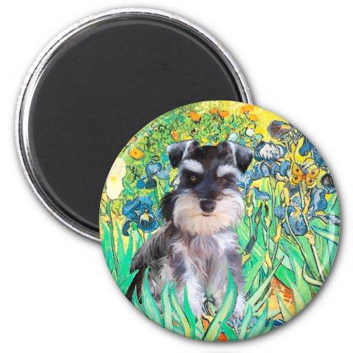Schnauzer Pup 10Znat - Irises Magnets