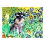 Schnauzer Pup 10Znat - Irises Postcard
