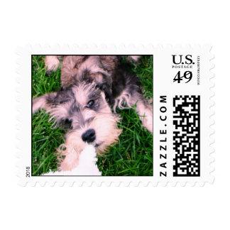 """Schnauzer Puppy--""""Let Go!"""" Stamps"""