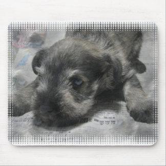 Schnauzer Puppy Mouse Pad