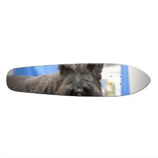 Schnauzer Skate Board