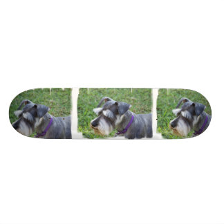 Schnauzer Skateboard
