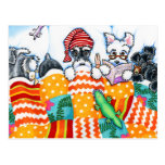 Schnauzers And Snoozes Postcards