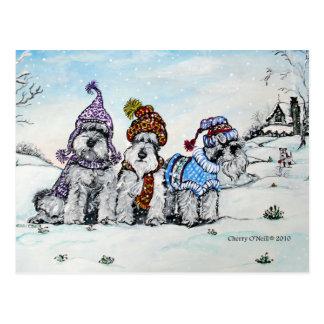 Schnauzers en invierno postal