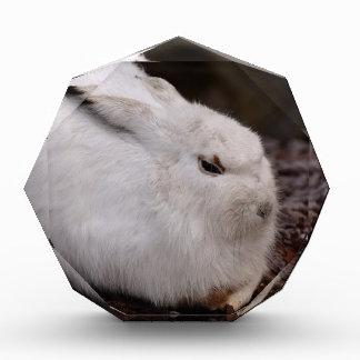 Schneehase Cute Zoo Animal Animal World Fur Hare Acrylic Award