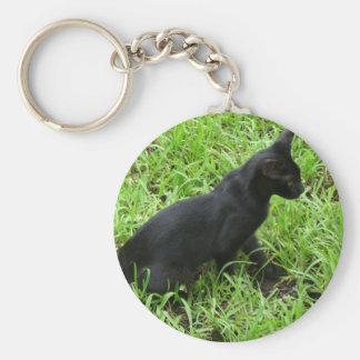 schöne schwarze Katze im Gras Schlüsselbänder