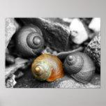 Schoodic Snails II Poster