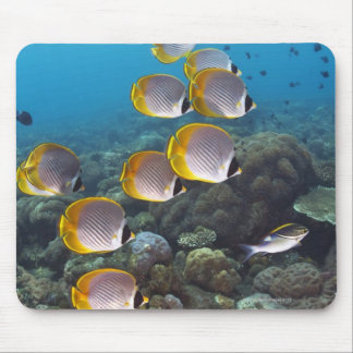 School of angelfish mouse pad