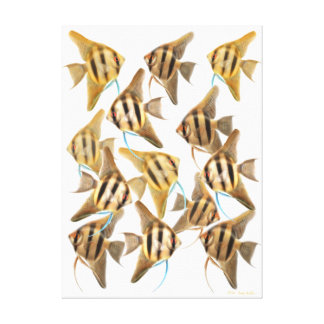 School of Aquarium Angelfishes Wrapped Canvas