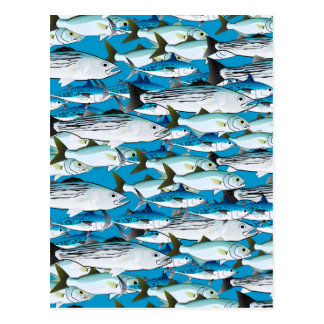 School of Atlantic Surf Fish in blue Postcard