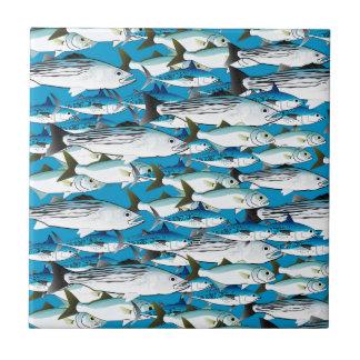 School of Atlantic Surf Fish in blue Tile