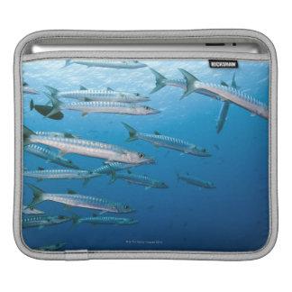 School of blackfin barracuda (Sphyraena qenie) iPad Sleeve