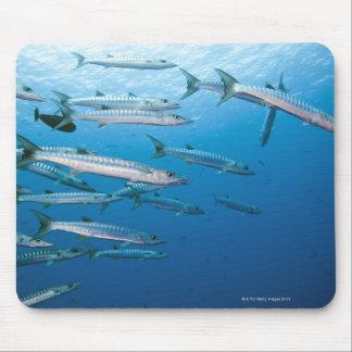 School of blackfin barracuda (Sphyraena qenie) Mouse Pad