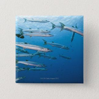 School of blackfin barracuda (Sphyraena qenie) Pinback Button