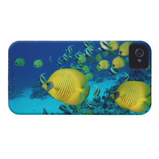 School of Butterfly Fish Swimming on the Seabed iPhone 4 Cases