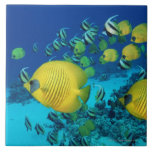 """School of Butterfly Fish Swimming on the Seabed Ceramic Tile<br><div class=""""desc"""">School of Butterfly Fish Swimming on the Seabed   Georgette Douwma   AssetID: dv2131012</div>"""