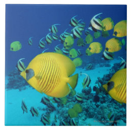 School of Butterfly Fish Swimming on the Seabed Ceramic Tile