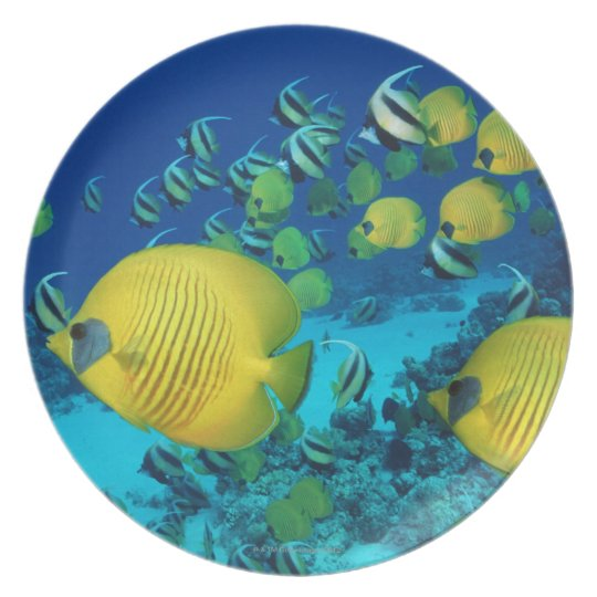 School of Butterfly Fish Swimming on the Seabed Melamine Plate