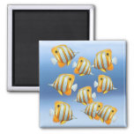 School of Copperband Butterfly Fish Magnet