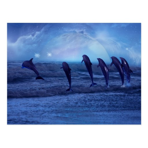 School of dolphins by moonlight post cards