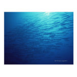 School of Fish 12 Postcard