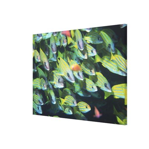 School of Fish 13 Canvas Print