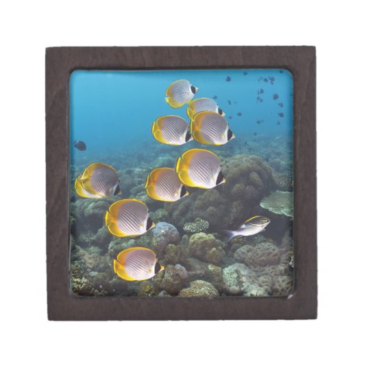 School of Fish 2 Keepsake Box