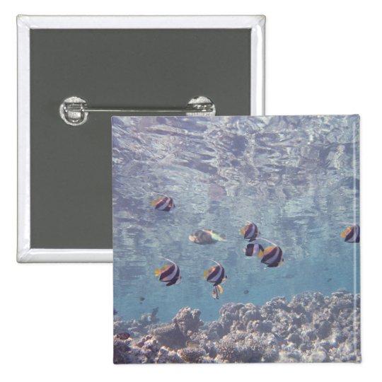 School of Fish 3 Pinback Button