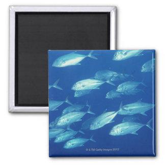School of Fish 4 2 Inch Square Magnet