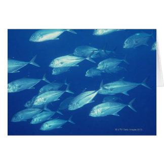 School of Fish 4 Card