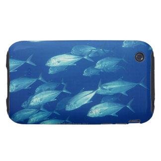 School of Fish 4 iPhone 3 Tough Case