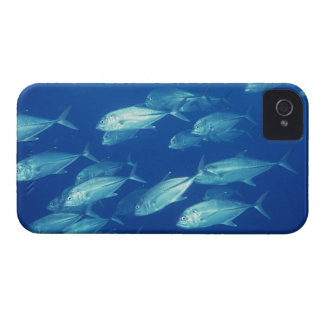 School of Fish 4 iPhone 4 Cover