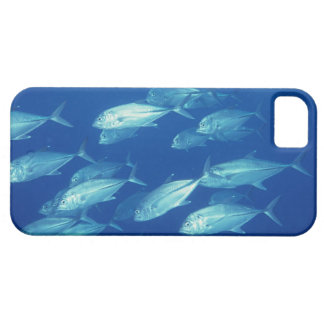 School of Fish 4 iPhone SE/5/5s Case