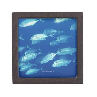 School of Fish 4 Keepsake Box