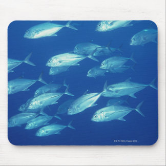 School of Fish 4 Mouse Pad