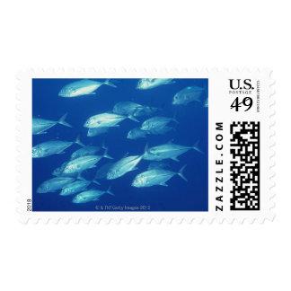 School of Fish 4 Postage
