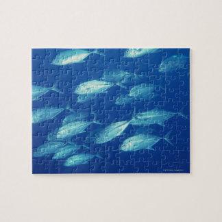 School of Fish 4 Puzzle