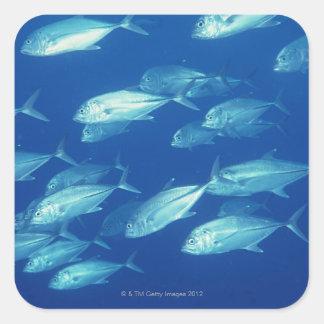 School of Fish 4 Square Sticker