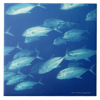 School of Fish 4 Tile