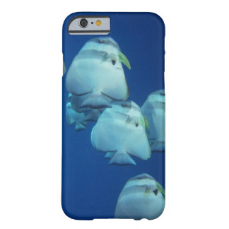School of Fish 5 Barely There iPhone 6 Case