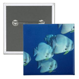 School of Fish 5 Button