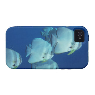 School of Fish 5 Case For The iPhone 4