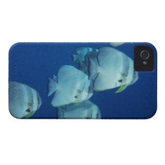School of Fish 5 Case-Mate iPhone 4 Cases