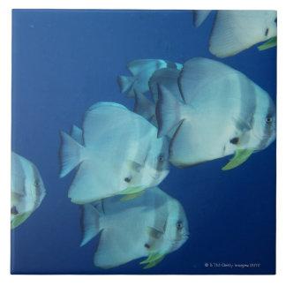 School of Fish 5 Ceramic Tile