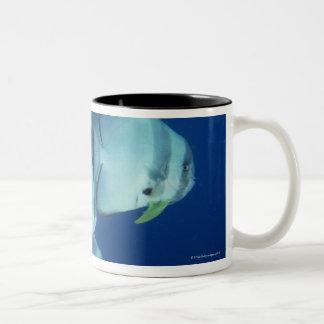School of Fish 5 Coffee Mug