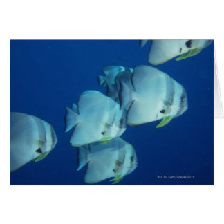 School of Fish 5 Greeting Cards