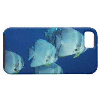 School of Fish 5 iPhone 5 Cases
